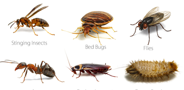 Brooklyn Ny Exterminator Pest Control Ants Rats Roaches Mice Bed